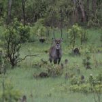 waterbuck hunting africa