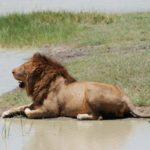 big game hunting zambia