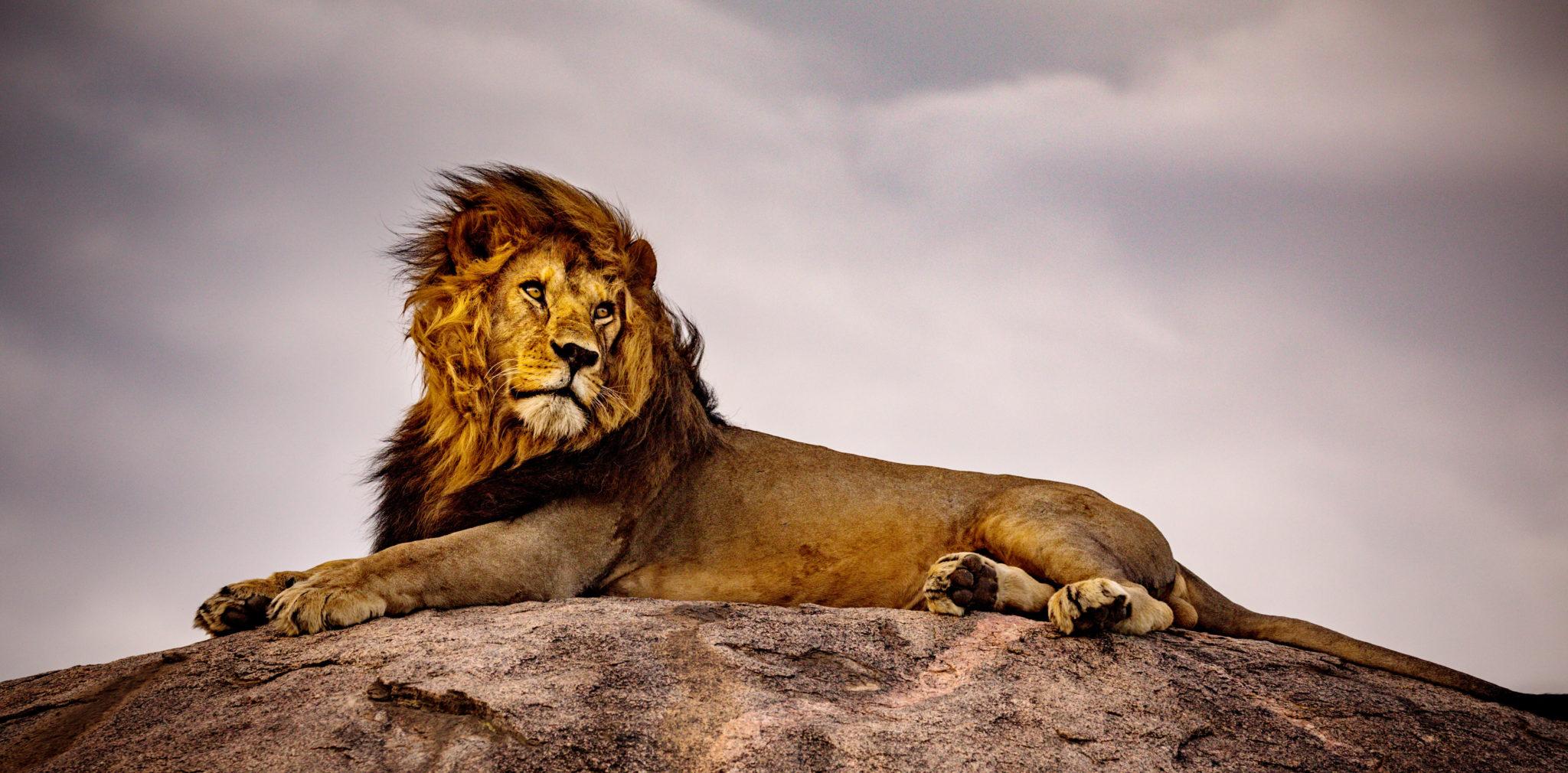 Photographic Safaris in Zambia