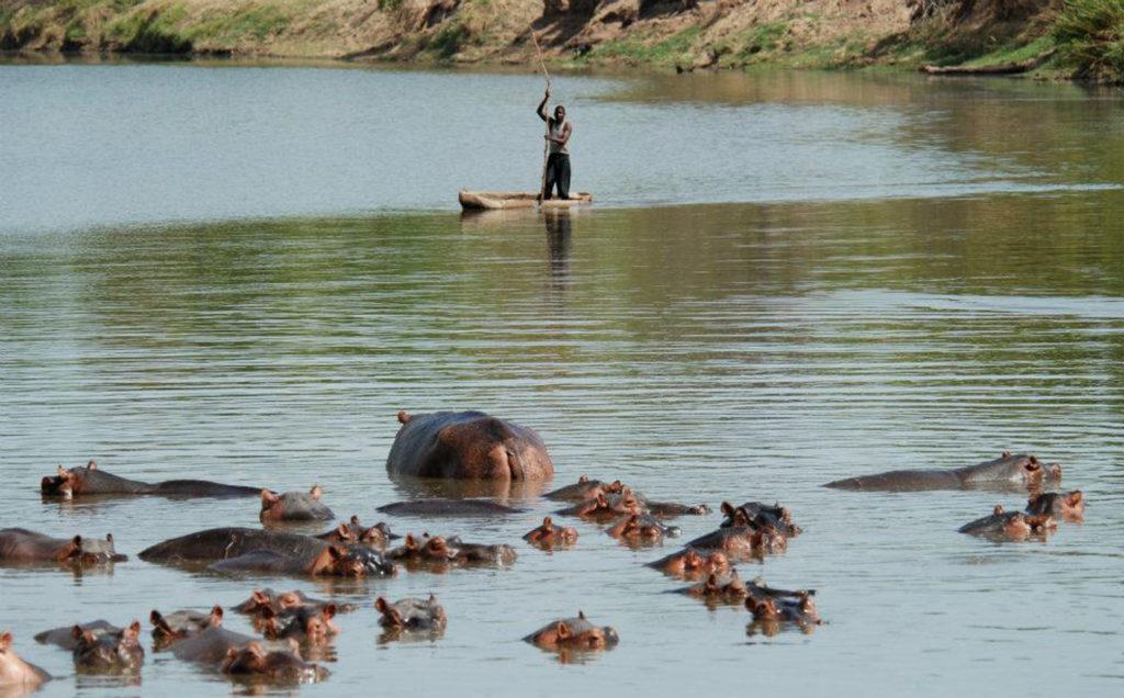 zambia hunting safari