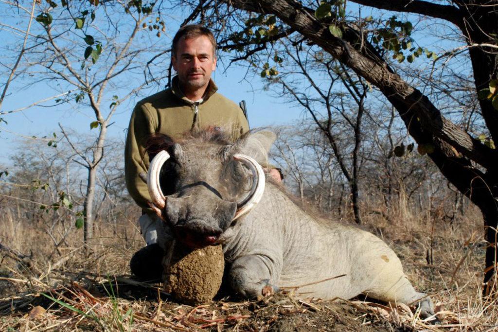 warthog hunting Luangwa Valley Zambia Africa