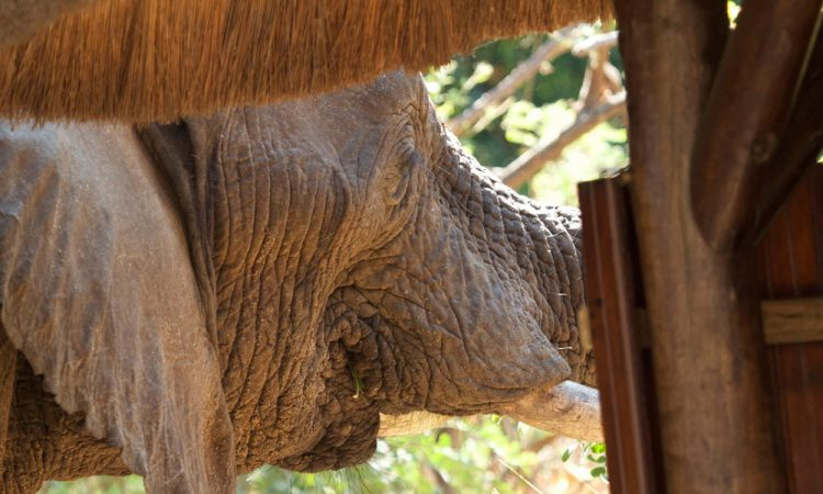 elephant hunting zambia